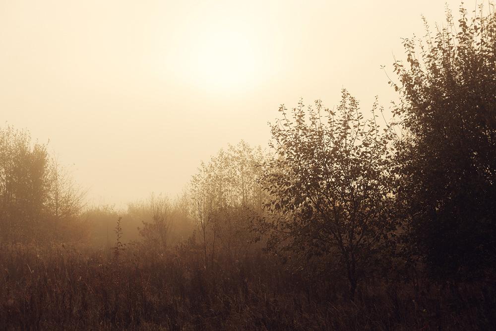 Nebelstimmung am Aueweiher in Fulda