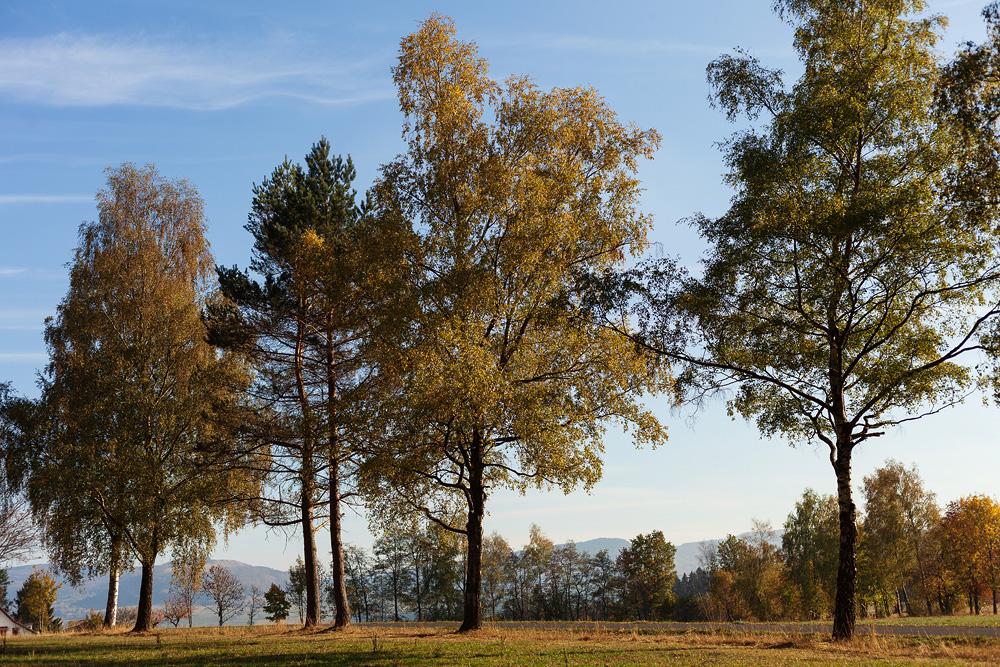Herbstbild am Wachtküppel in der Rhön