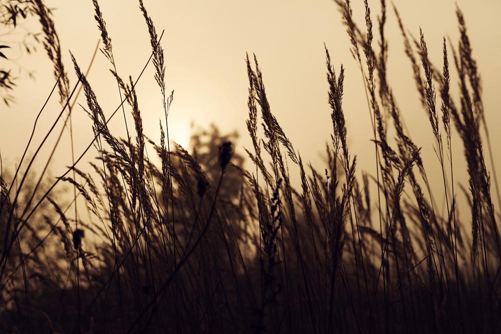 Sonnenaufgang am Aueweiher in Fulda