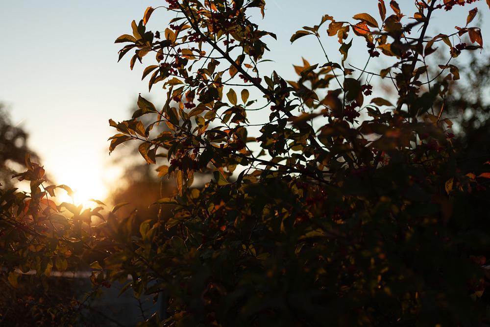 Sonnenuntergang am Geisküppel in Künzell