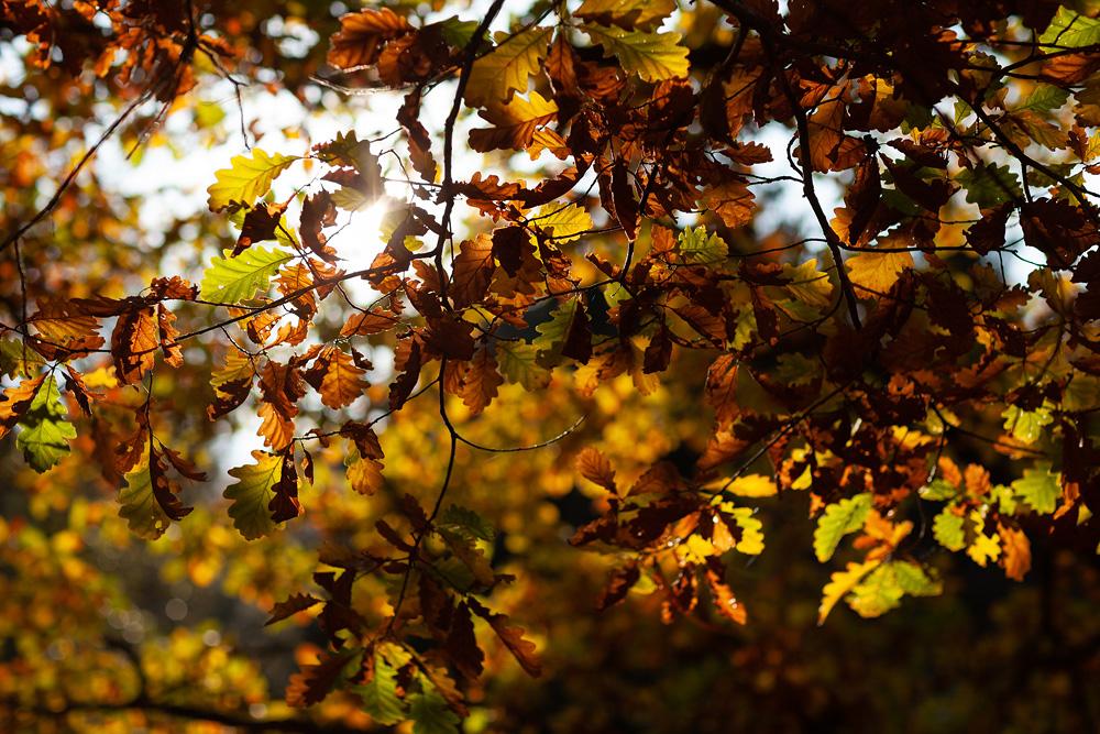 Ein wahrlich Goldener Oktober - Herbstbilder aus der Region
