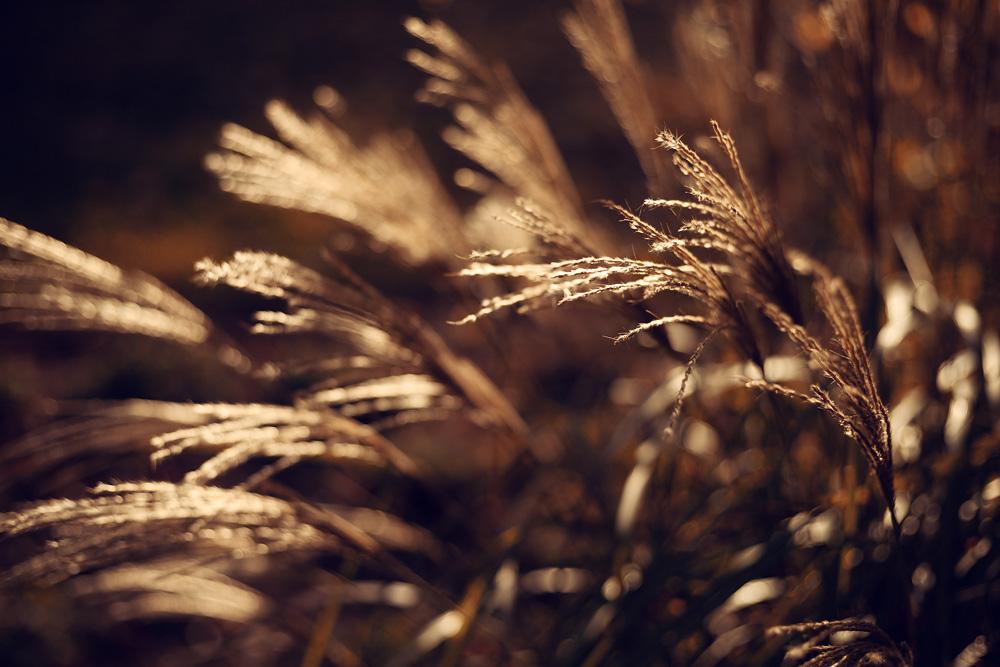 Herbstbilder aus der Region Fulda