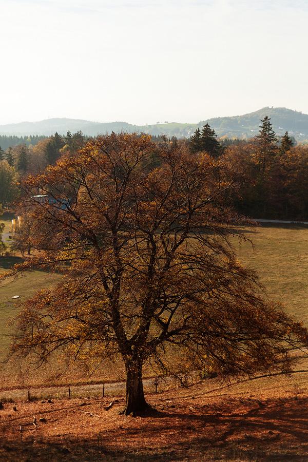Herbstfoto in der Rhön