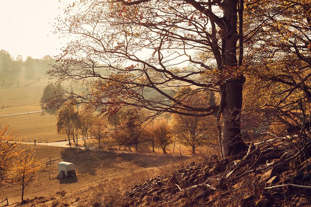 Am Wachtküppel in der Rhön