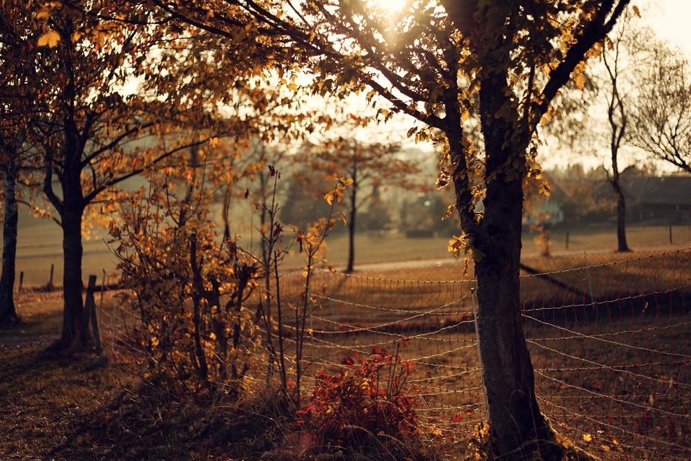 Sonnenuntergang am Wachtküppel in der Rhön