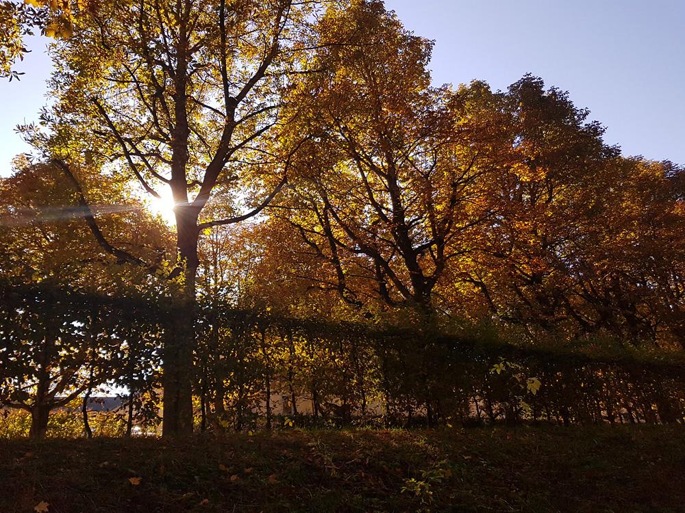 Herbstbild vom Schlosspark in Fulda