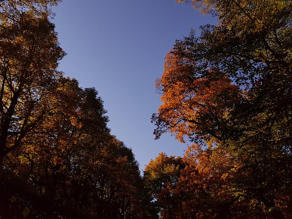 Fuldaer Schlosspark im Herbst